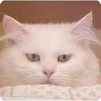 Adopt A Pet :: Sophie - Lunenburg, MA