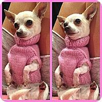 Adopt A Pet :: Princess - Los Angeles, CA