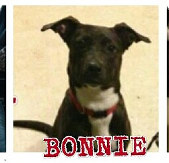 Terrier (Unknown Type, Medium)/Labrador Retriever Mix Dog for adoption in Dayton, Ohio - Bunny