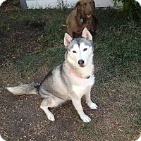 Adopt A Pet :: Breeze - Plano, TX