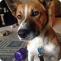 Adopt A Pet :: Ezra - WAterford, WI