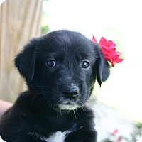 Adopt A Pet :: Madison - Knoxville, TN