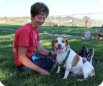 Beagle Mix Dog for adoption in Elyria, Ohio - Harper Lee