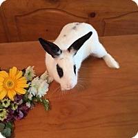 Adopt A Pet :: Sammie - Maple Shade, NJ