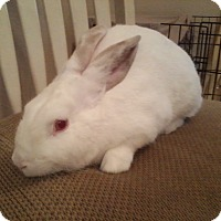 Adopt A Pet :: Crispin - Watauga, TX