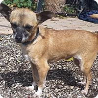 Adopt A Pet :: Ted - Santa Barbara, CA