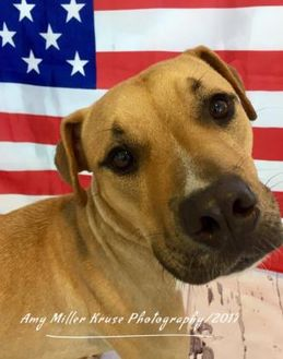 Mixed Breed (Large) Mix Dog for adoption in Land O'Lakes, Florida - Tanner