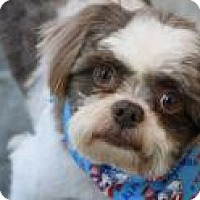 Adopt A Pet :: charlie - Greensboro, NC