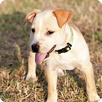 Adopt A Pet :: Butterscotch - oklahoma city, OK