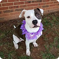 Adopt A Pet :: Cielo - Lexington, NC
