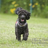 Adopt A Pet :: Griffen - Courtice, ON