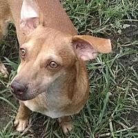 Adopt A Pet :: Jason - Pembroke, GA