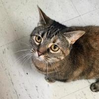 Adopt A Pet :: Peppers - Monroe, MI