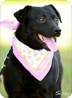 Terrier (Unknown Type, Medium) Mix Dog for adoption in Wilmington, Delaware - Sissy
