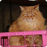 Adopt A Pet :: Pratt - Maxwelton, WV