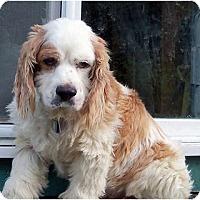 Adopt A Pet :: Tucker - Tacoma, WA