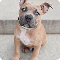 Adopt A Pet :: Royce - Reisterstown, MD