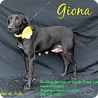 Adopt A Pet :: Giona - Plano, TX