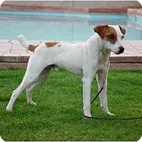 Adopt A Pet :: COWBOY - Scottsdale, AZ