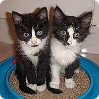 Adopt A Pet :: Luciano and Figaro - Miami, FL