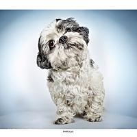 Adopt A Pet :: Princess - New York, NY