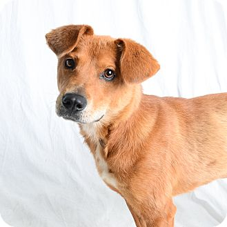 Retriever (Unknown Type) Mix Dog for adoption in Wilmington, Delaware - Cassey