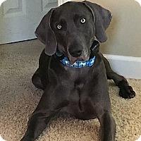 Adopt A Pet :: Ruger - Grand Haven, MI