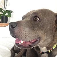 Adopt A Pet :: Heather - Santa Monica, CA