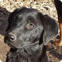 Adopt A Pet :: Chanel AD 05-06-17 - Preston, CT