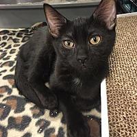 Adopt A Pet :: Kenya - Boynton Beach, FL