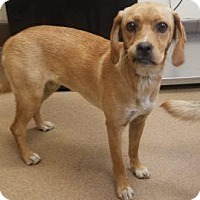 Adopt A Pet :: Janie #168555 - Apple Valley, CA