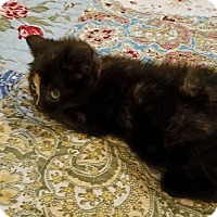 Adopt A Pet :: Electra - Geneseo, IL