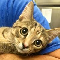 Adopt A Pet :: Candy - West Olive, MI