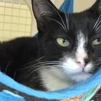 Adopt A Pet :: Bangladesh - Warren, MI