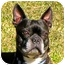 Photo 1 - Boston Terrier Dog for adoption in North Augusta, South Carolina - FRANKIE