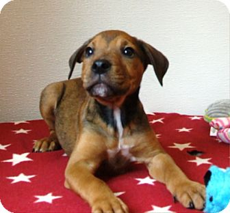 Hound (Unknown Type) Mix Puppy for adoption in Kalamazoo, Michigan - Carl