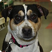 Adopt A Pet :: Carly - PENDING, in Maine - kennebunkport, ME