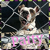 Adopt A Pet :: Patty - Donaldsonville, LA