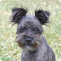 Adopt A Pet :: Bunny - Mocksville, NC
