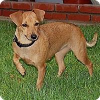 Adopt A Pet :: Super Friendly Greta - La Habra Heights, CA