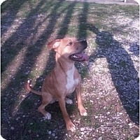 Adopt A Pet :: Maple - Indianapolis, IN