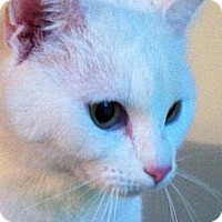 Adopt A Pet :: Angel - Monroe, GA