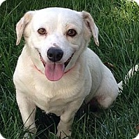 Adopt A Pet :: Bailey - La Habra Heights, CA