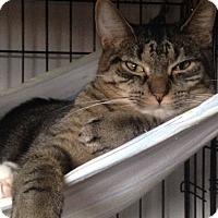 Adopt A Pet :: Rebel - Freeport, NY