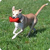 Adopt A Pet :: Zunzi - Bakersville, NC