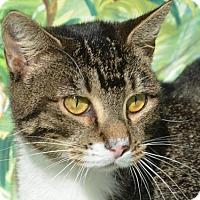 Adopt A Pet :: Mischa - Englewood, FL