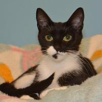 Adopt A Pet :: Harmony - Cincinnati, OH