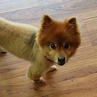 Adopt A Pet :: Madden - Dallas, TX