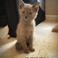 Adopt A Pet :: Teddy - Chattanooga, TN