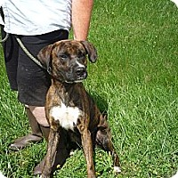 Adopt A Pet :: #184-13 @ Animal Shelter - Zanesville, OH